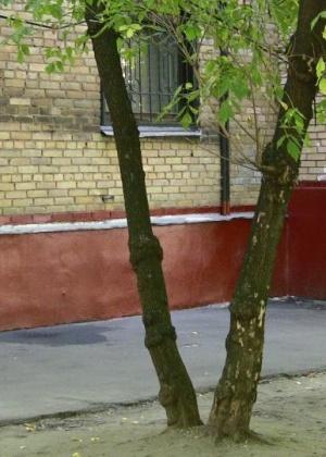 Писсинг - Галерея № 3020252